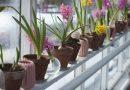 Kwiaty doniczkowe – które znich najlepiej ozdobią przestrzeń? Podpowiadamy!
